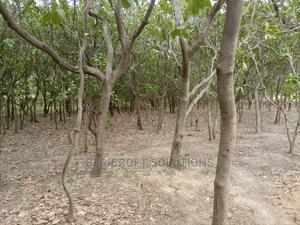 1900sqm Residential Land for Sale in Katampe   Land & Plots For Sale for sale in Katampe, Katampe (Main)
