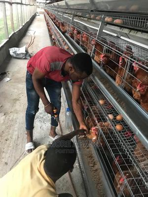 Mr Adewale | Farming & Veterinary CVs for sale in Delta State, Okpe