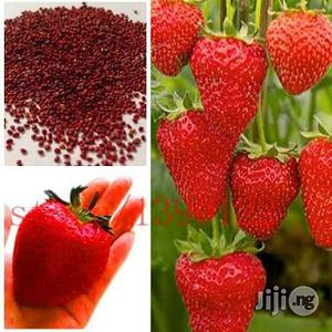 Strawberry Seeds 50 Seeds | Feeds, Supplements & Seeds for sale in Plateau State, Jos