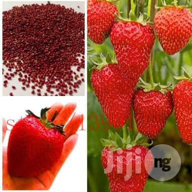 Strawberry Seeds 50 Seeds