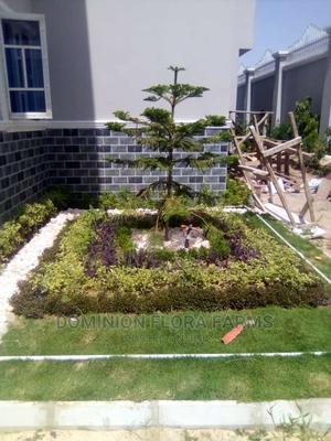 Gardening Services.   Landscaping & Gardening Services for sale in Kano State, Tarauni
