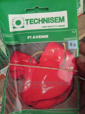 Avenir 5g Pepper   Feeds, Supplements & Seeds for sale in Oyo State, Ibadan