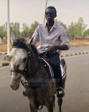 White Horse   Other Animals for sale in Niger State, Minna