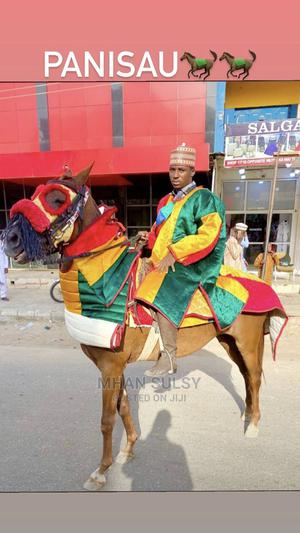 A Horse For Sale   Other Animals for sale in Niger State, Minna