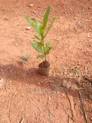 Agro-Tech Farm | Feeds, Supplements & Seeds for sale in Abuja (FCT) State, Central Business Dis