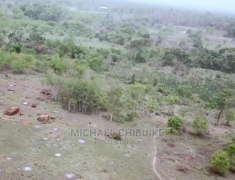 Archive: Farmland At Abeokuta - MICL Farms