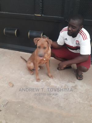 Dogs and Puppy Trainer | Pet Services for sale in Abuja (FCT) State, Gwagwalada