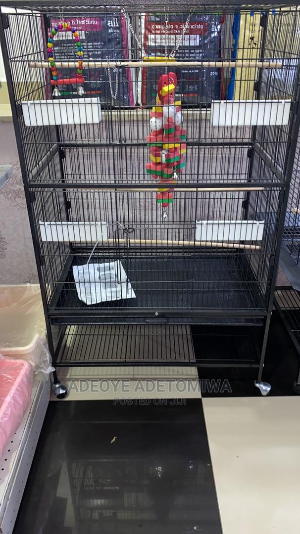 Archive: Parrots Cage Available for Sale