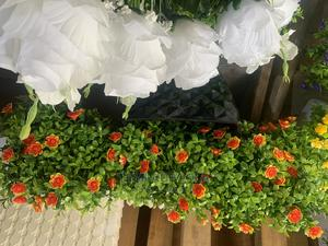 Fence Plant   Garden for sale in Lagos State, Ogba