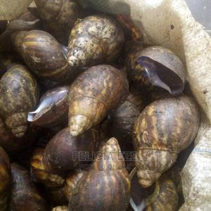 Edible African Giant Snails | Other Animals for sale in Abuja (FCT) State, Asokoro
