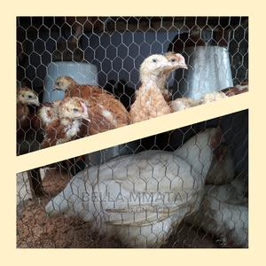 Broilers Noiler Chickens | Livestock & Poultry for sale in Rivers State, Port-Harcourt