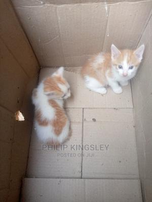 1-3 Month Male Mixed Breed Cat | Cats & Kittens for sale in Abuja (FCT) State, Dutse-Alhaji