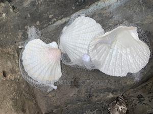 Aquarium Shells | Fish for sale in Lagos State, Lekki