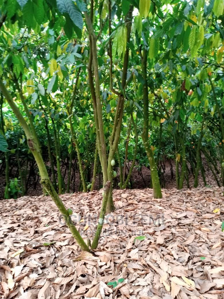 Cocoa and Oil Palm Plantation   Land & Plots For Sale for sale in Iwo, Osun State, Nigeria