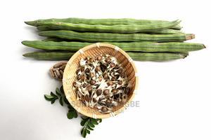Moringa Seeds,Moringa Leafs and Moringa Seedlings for Sale | Feeds, Supplements & Seeds for sale in Ogun State, Abeokuta South