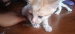 1-3 Month Female Mixed Breed Other | Cats & Kittens for sale in Lagos State, Ikeja