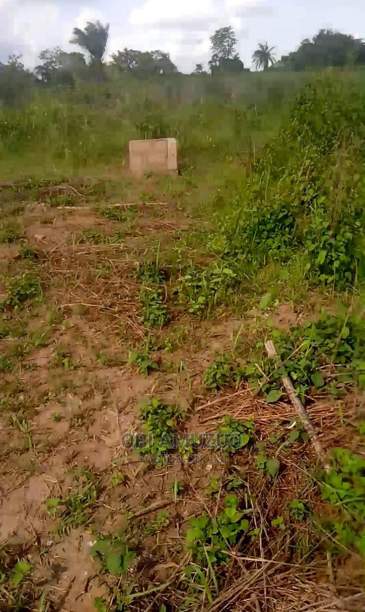 Fertile Virgin Farmland for Lease