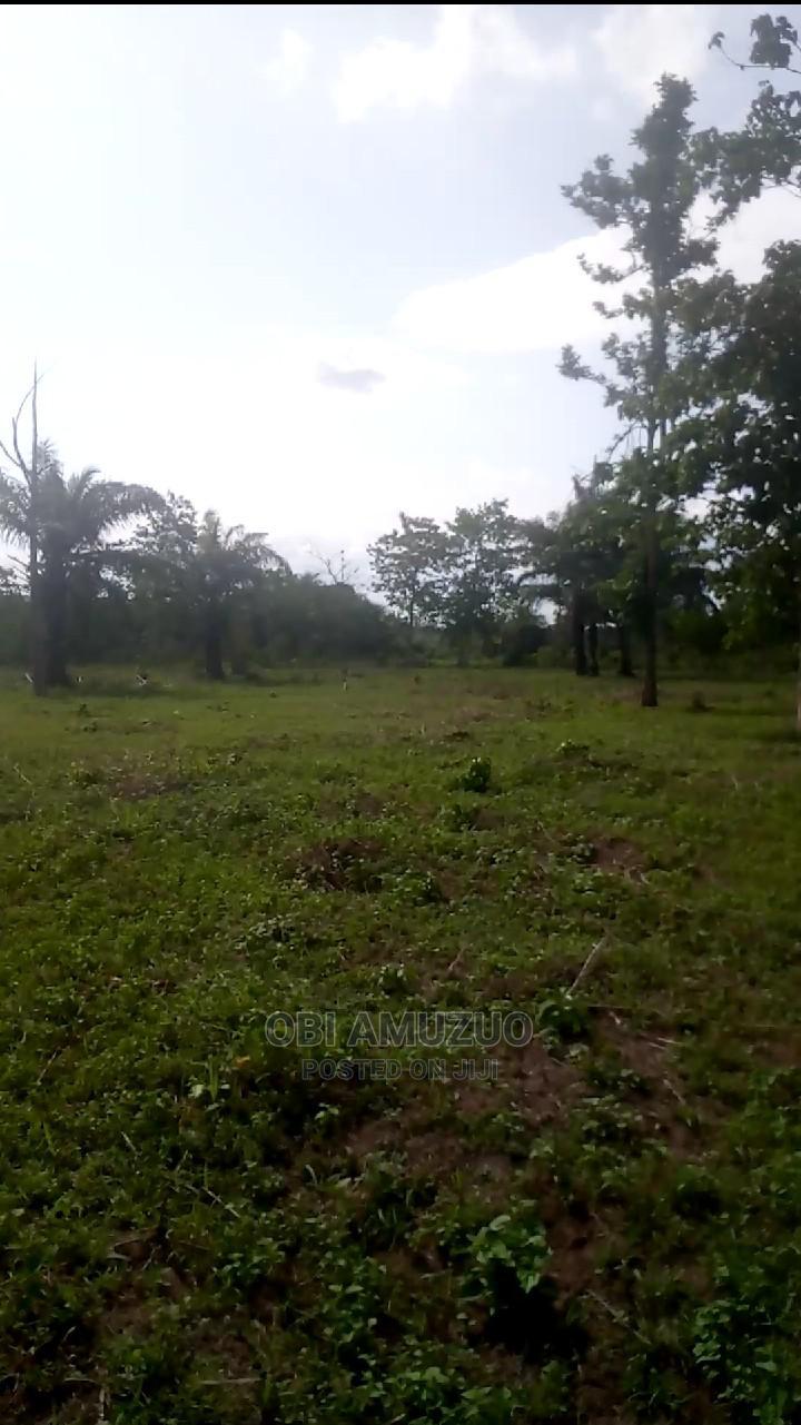 Fertile Virgin Farmland for Lease | Land & Plots for Rent for sale in Ado-Odo/Ota, Ogun State, Nigeria