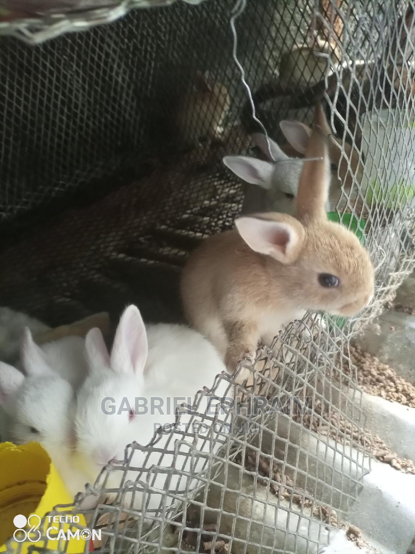 Rabbit's, Palomino Breeds