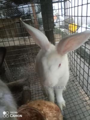 Rabbit's, All Types of Exotic Breeds Available | Livestock & Poultry for sale in Rivers State, Port-Harcourt