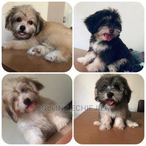 1-3 Month Female Purebred Lhasa Apso | Dogs & Puppies for sale in Lagos State, Alimosho