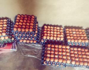 Folabid Eggs | Livestock & Poultry for sale in Ogun State, Ewekoro