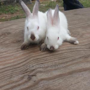 Hylamax Rabbits Weaners for Sale in Portharcourt | Livestock & Poultry for sale in Rivers State, Port-Harcourt