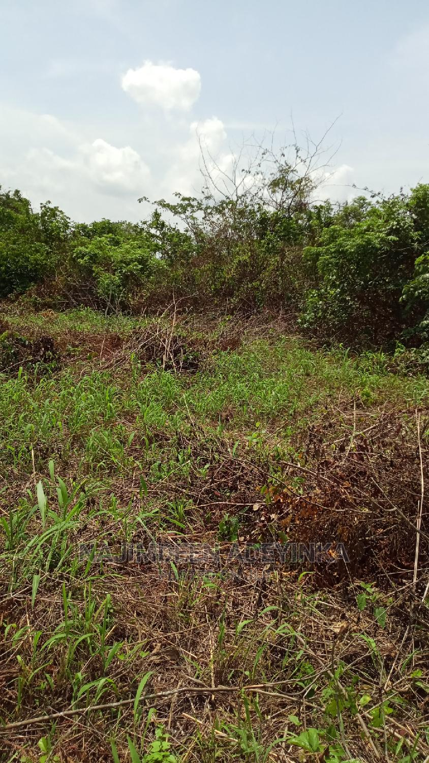 1 Acre of Land for Rent for Agricultural Purposes Etc   Land & Plots for Rent for sale in Obafemi-Owode, Ogun State, Nigeria