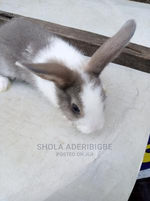 Rabbit for a New Home | Livestock & Poultry for sale in Lagos State, Agege