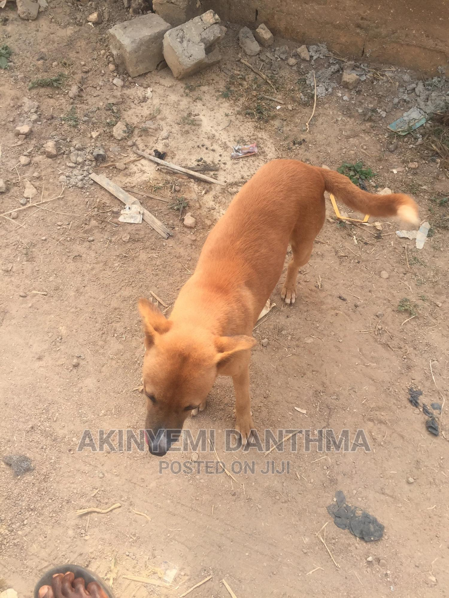 Archive: 1+ Year Male Mixed Breed Other