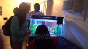 Aquariums In Lagos | Fish for sale in Lagos State, Ikoyi