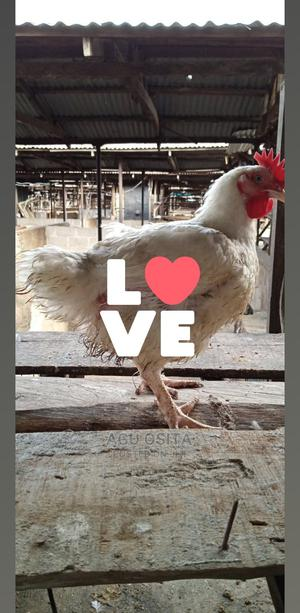 Broiler,Old Layer, Turkey Etc | Livestock & Poultry for sale in Rivers State, Ikwerre