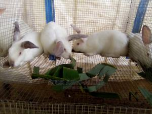 Hyla Grower Rabbits for Sale | Livestock & Poultry for sale in Oyo State, Ido