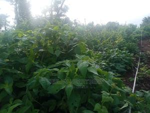 Plots of Land for Sale | Land & Plots For Sale for sale in Osun State, Ilesa