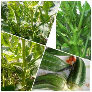 Okoro Plant Seedlings | Feeds, Supplements & Seeds for sale in Oyo State, Ibadan