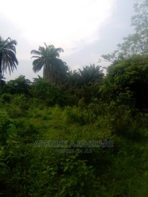 Oil Palm Plantation 3 Acres at Iwo, Odo Ori Osun State | Land & Plots For Sale for sale in Osun State, Iwo