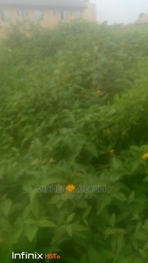 A Plot of Land for Sale.   Land & Plots For Sale for sale in Osun State, Ife