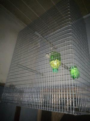Parrots Cage,Cannery Cage and Other Bird Cages Avialable.   Pet's Accessories for sale in Lagos State, Ikorodu