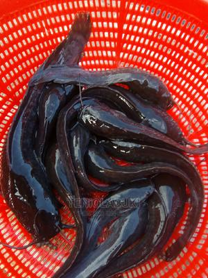 Fast Growing Juvenile Fish | Livestock & Poultry for sale in Bauchi State, Bauchi LGA