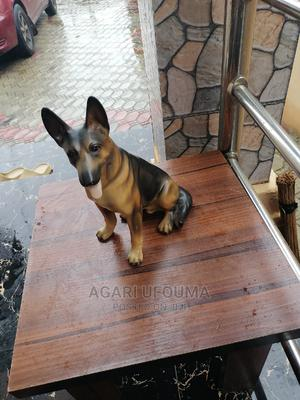 Dog for Decoration   Arts & Crafts for sale in Lagos State, Ojo