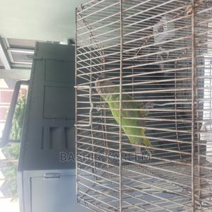 Senegalese Parrot for Sale | Birds for sale in Lagos State, Lekki