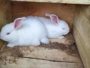 Quality HYLA Weaner Rabbit Does | Livestock & Poultry for sale in Kwara State, Ilorin South