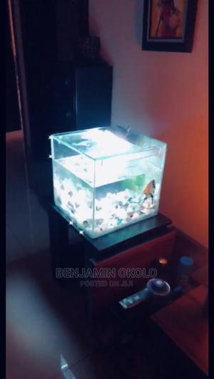 Aquarium Fish | Fish for sale in Edo State, Ovia South
