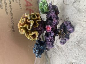 Coral Designs | Fish for sale in Lagos State, Lekki