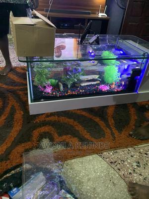 Center Table Aquarium | Fish for sale in Lagos State, Ajah