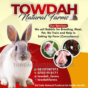 Pet Rabbits for Sale   Other Animals for sale in Lagos State, Alimosho