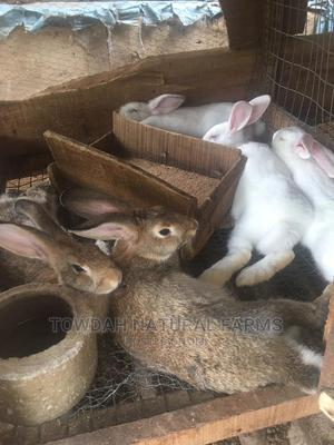 Breeding Doe (Mother) and Buck (Father),Growers and Weaners | Livestock & Poultry for sale in Lagos State, Alimosho