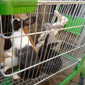 Healthy Rabbit   Other Animals for sale in Lagos State, Ikeja