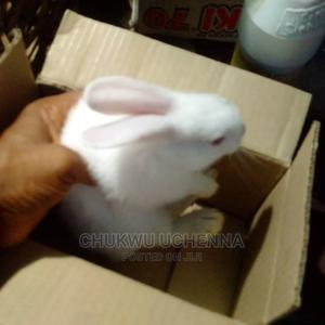 Healthy Weaners Rabbits For Sale.   Livestock & Poultry for sale in Lagos State, Ajah