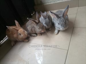 Rabbit Of Different Bridge   Other Animals for sale in Cross River State, Calabar